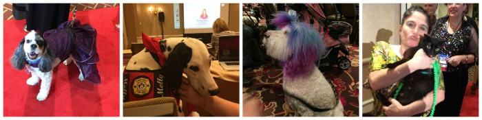 Blogpaws1 Collage