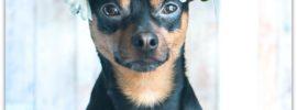 Animal Aromatherapy News