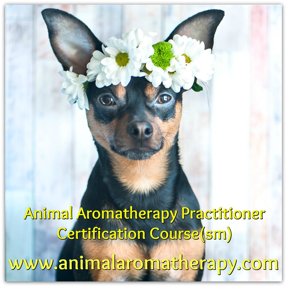 Animal Aromatherapy News Kayla Fioravanti